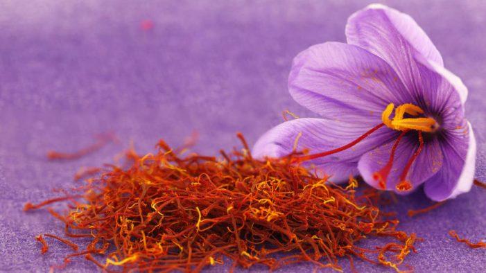 西班牙特产介绍-番红花